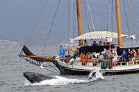 Puerto Vallarta Whale Watching tour